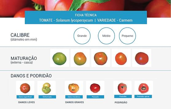 Ficha técnica tomate