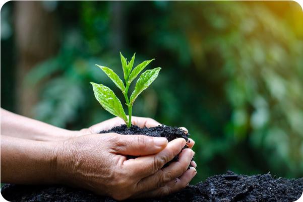 Sustentabilidade: confira 6 benefícios